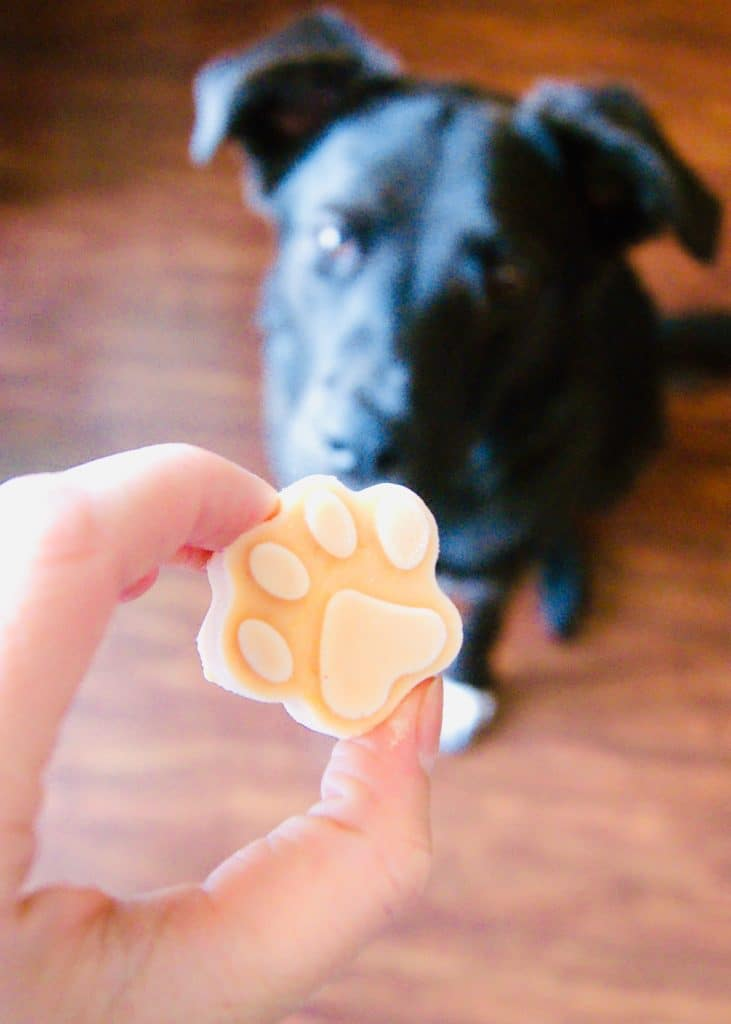 Dog-ice-cream-paw-print-with-black-dog-in-background